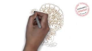 Как нарисовать птицу индюк(Как нарисовать индюка поэтапно простым карандашом за короткий промежуток времени. Видео рассказывает..., 2014-06-25T14:08:14.000Z)
