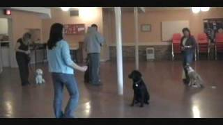 In Dogs We Trust-dog Training Classes In London Ontario