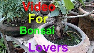 What Is Bonsai | Bonsai Kia Hai | Hum Bonsai Kese Bna Skty Hain | Information in Detailed
