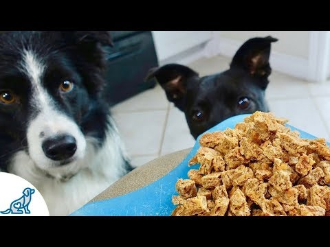 The Best Homemade Dog Treats - Professional Dog Training Tips