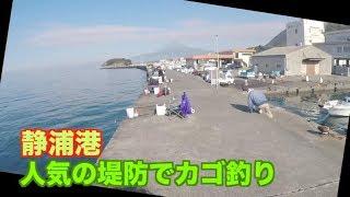静浦港でカゴ釣りしたらイナダフェスに!!