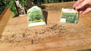 Dill & Parsley Seed Saving & Sowing