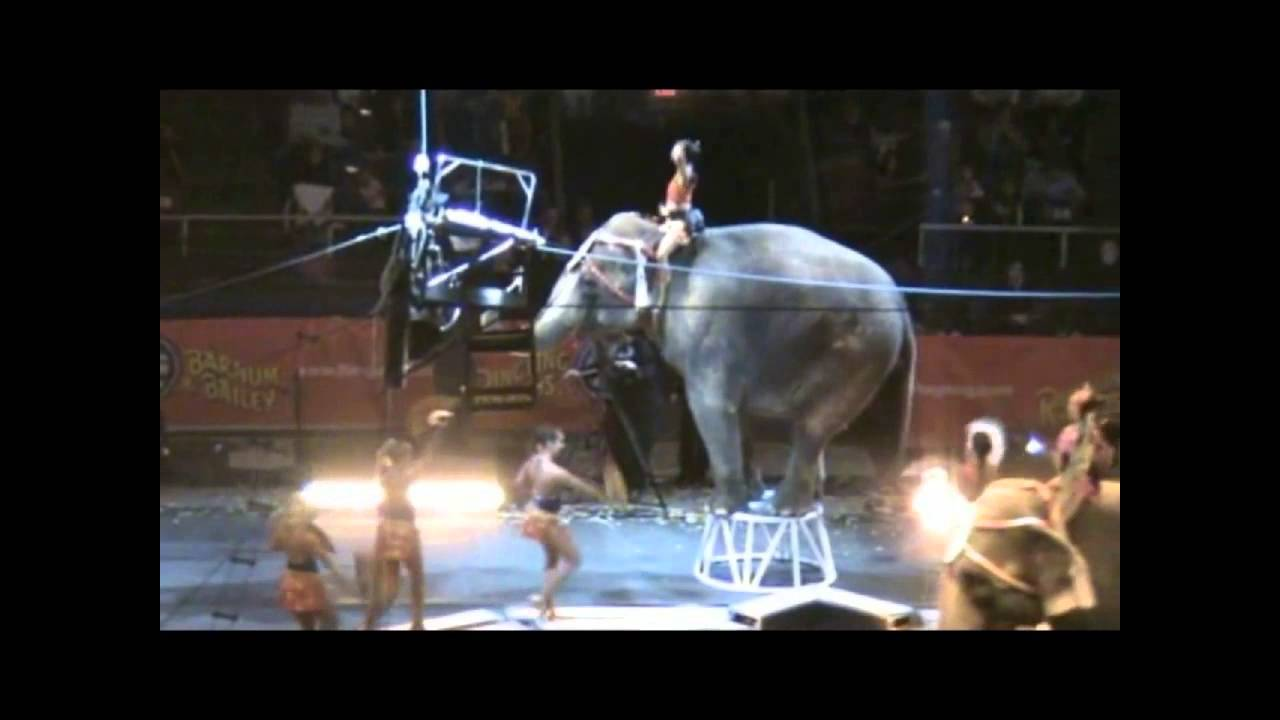 Ringling Bros Circus Hd Madison Square Garden Nyc Youtube