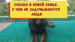 СОБАКА В НОВОЙ СЕМЬЕ.ГЛАВНАЯ ОШИБКА ЧЕЛОВЕКА.воспитание и дрессировка собак