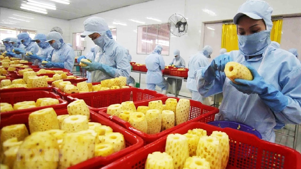 How it made Dried Fruit - Durian,Strawberry,Pineapple Chips Processing in factory - Fruit Snack