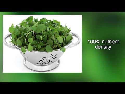 4 Best Disease Fighting Powerhouse Foods