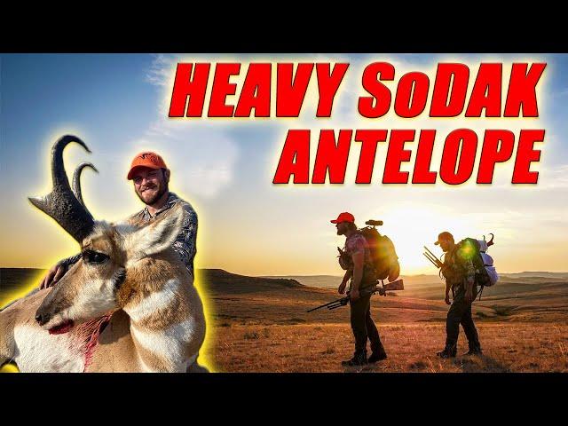 Heavy South Dakota Antelope