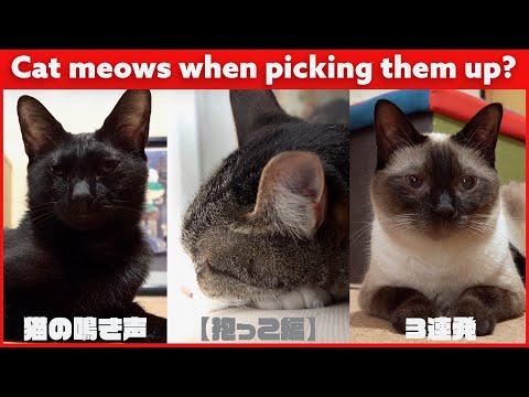 猫の鳴き声【抱っこ編】3連発