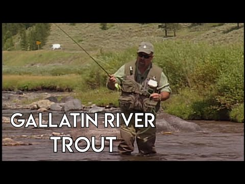 Gallatin River Fly Fishing | Montana