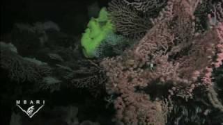 Davidson Seamount: The Biology of an Underwater Mountain