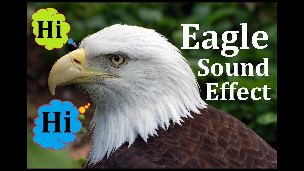 Bald Eagle Kindergarten