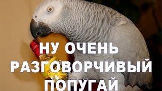 Попугай жако поёт, говорит, танцует и не только :)