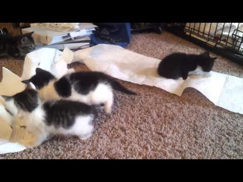 Kittens Playing and Making a Mess