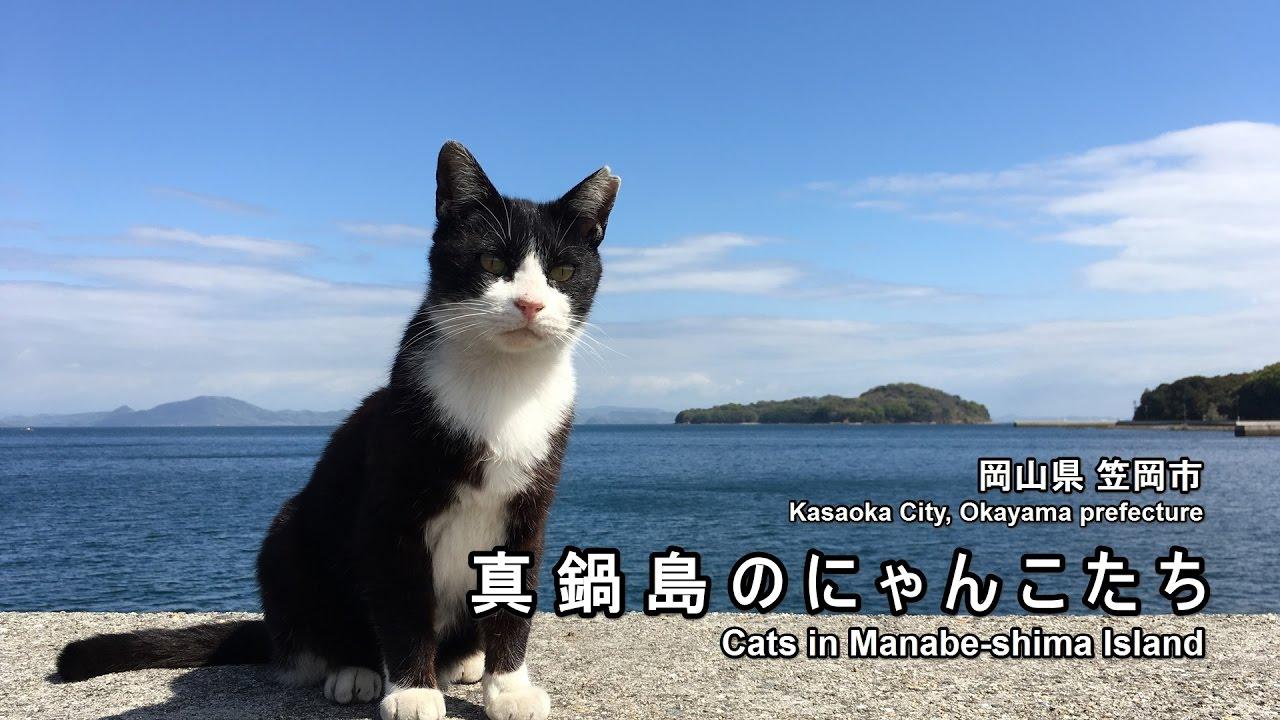 真鍋島の貓と海と青い空 - YouTube