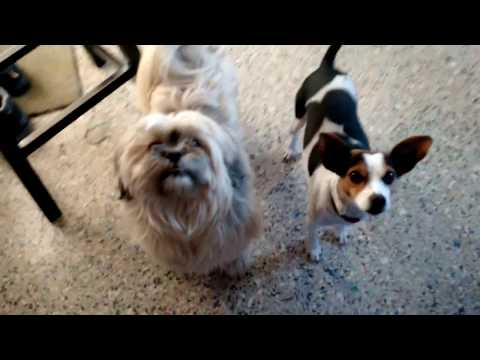 The Wonderific Tutter & Little Red Dynamic Duo Farm Dog Talent Show