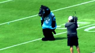 Sir Purr Dance - 2013 Carolina Panthers Fan Fest - Bank Of America Stadium