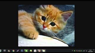 Картинки с котятами)) Ч.О.