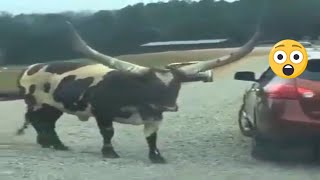 ✅TRY NOT to LAUGH FUNNY  #5  🎺  Animals FAILS 🔥 funny videos | funny fails 2021 | fails animals