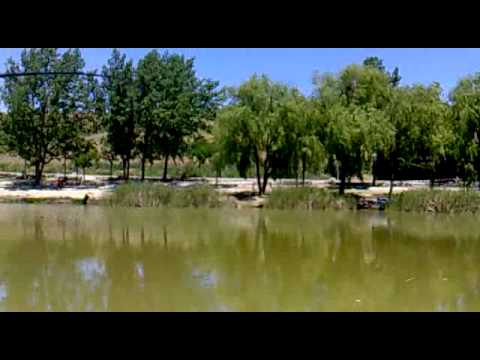 Pesca de carpas en el Butarque Travel Video