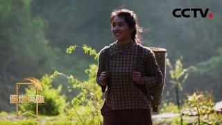 《遍地英雄》 20200423 留守大山里的新青年|CCTV农业