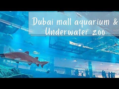 Dubai mall aquarium and underwater zoo/throwback 2019