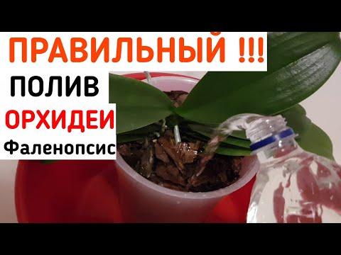 Как часто поливать фаленопсис в домашних условиях