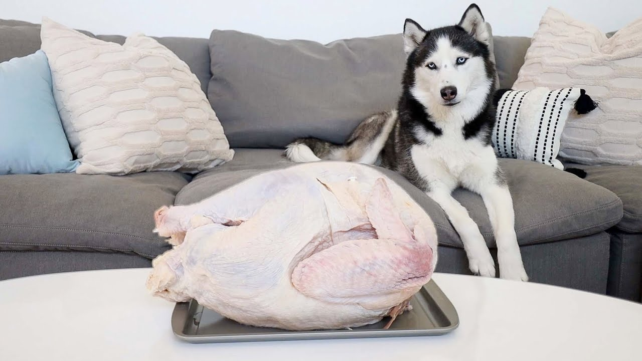 Leaving My Huskies Alone with a Giant Raw Turkey!