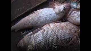 На Ямале увеличены квоты на традиционное рыболовство