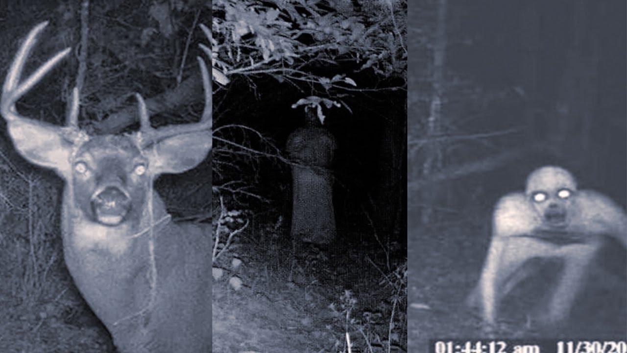 Navajo Skinwalker Sightings Scary Skinwalker Pictu...