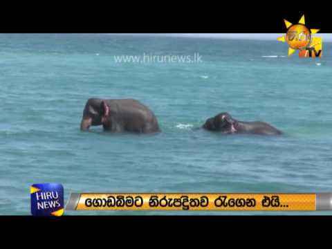 Two elephants rescued by Sri Lanka Navy