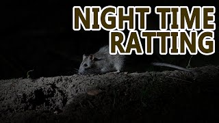 Night Time Ratting | Working Terriers