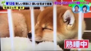TV東京「どうぶつBANG」で放映されました!