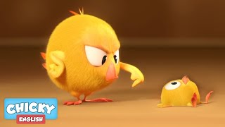Where's Chicky? Funny Chicky 2020 | BABY CHICKY | Chicky Cartoon in English for Kids
