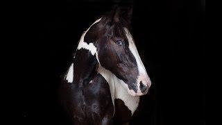 Run Boy Run [Equestrian Music Video]
