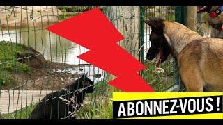 MON ANIMAL CHAT - CHIEN  - INCROYABLE DON ! thumbnail