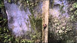 Piratas Das Ilhas Selvagens 1983 - Telecine (Áudio bom e compteto)