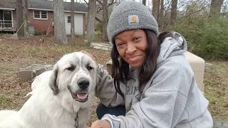 Livestock Guardian Dogs ~ Why We Chose The Great Pyrenees