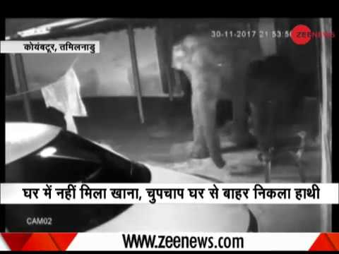 Watch: Elephant, his calf enter house in search of food in Coimbatore, Tamil Nadu