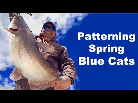 Patterning Spring Blue Catfish - Spring Blue Cats - How To Catch Spring Catfish