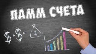 видео Лучшие ПАММ счета и как правильно инвестировать в них