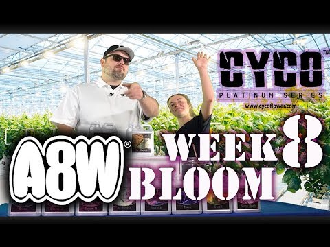 A8W Cyco Nutrients WK 8 Bloom Feed Chart How to SE1EP11 (Official