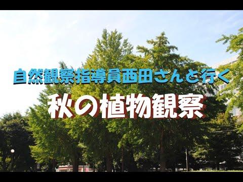 自然観察指導員西田さんと行く「秋の植物観察」