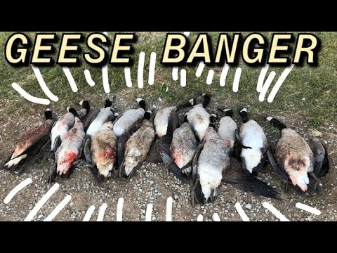 UNREAL Tennessee Goose Hunt