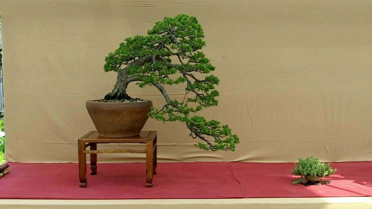 Kei Bonsai Kai Exhibition Part I Improved Version Youtube Wiring Demo