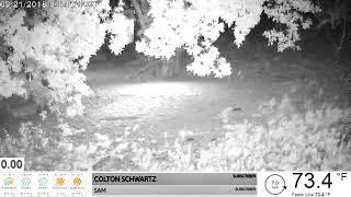 Wild Hogs On Camera 9-21-18 thumbnail