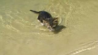 Кошка плавает в воде (cats water swimming)