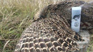 Охота на серую куропатку с курцхааром