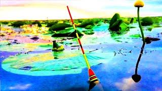 Да сколько же КАРАСЯ в этих кувшинках Рыбалка на поплавок