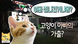 고양이 아빠 가출사건! 농담이 진담이된 사건! 🙀