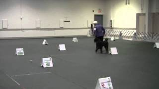 Cantope Poodles Rally Obedience Trial Sterling #2.wmv